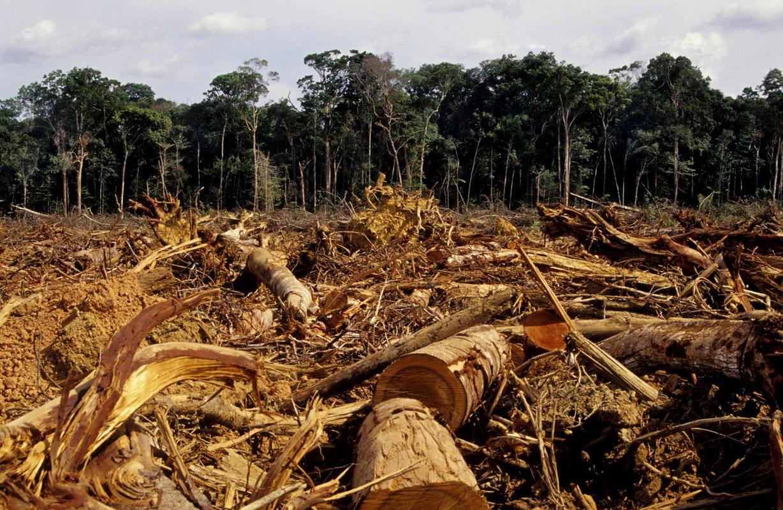 """Résultat de recherche d'images pour """"déforestation"""""""""""
